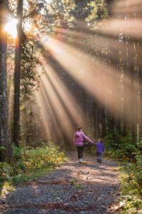 Read more about the article Wandertage in der Haflinger Alm! Fragt gerne unsere Herbstspecials für unter der Woche an!